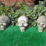 MS24-MS26 - Variety of Skulls