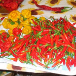 Piccante a Mazzetti, Scotch bonnet, Bishop's Crown, Lazzaretto