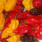 Fatalii Rosso e giallo con Habanero Chocolate