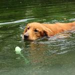 schwimmen ist toll!