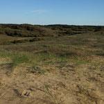La forêt d'Olonne - Repérage du parcours - Vert'Olonne