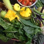 In der Küche: Kürbisse, Tomaten. Bohnen, Mangold, Gänsefuß, Malaberspinat, Grünkohl