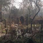 Zum Frühlingsbeginn im März sieht es auf den ersten Blick noch recht trostlos aus im Permakulturgarten