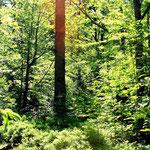 Sonnendurchflutender Wald