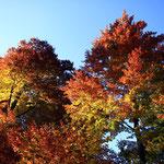 Bunte Blätter leuchten in der Herbstsonne