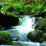 Munter fließt das Wasser über Stock und Stein