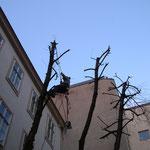 Foto 5 Mehr Licht in einem Wiener Innenhof