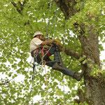 Foto 1 Baumpfleger Ernst Mohrenberger