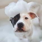 Haus- und Tierpflege