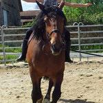 Séjour dévouverte cheval en Vendée