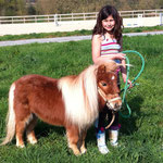 Poney club et baby poney