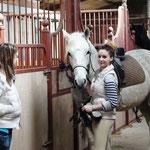 Ecurie et pension pour chevaux