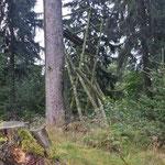 ... gibt es einen wunderschönen Wald ...