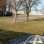 Krokuswiesen in Schlößchen