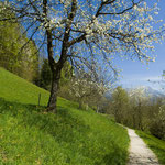 Sinnesweg im Frühling © TVB Wilder Kaiser
