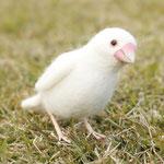 文鳥 白モデル