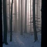 Die Sonnen bricht im Winterwald durch den Nebel