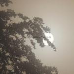 Herbstimpression - Sonnenaufgang - Blick von der Tillyschanze