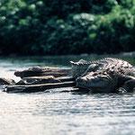Die See Vicktoria. Tansania.