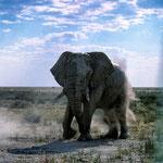 Etoscha. Namibia.