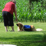 Luann Kopp in a successful Obedience Commands Session with Nick.