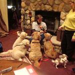 Cookie, Ginger, Brutus, Tinkerbell & Romy