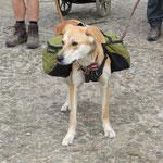 Le chien Pèlerin
