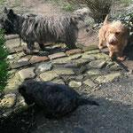 Die drei großen Hunde haben da auch 'ne super Vorbildrolle.