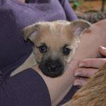 Klein-Bella ist offensichtlich angekommen und fühlt sich wohl im Arm ihrer Adoptivmama...