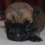 Dunkles (Kaiser-)Schnittchen - geboren am 26.01.20 um 2.10h, Farbe ist noch nicht klar aber dunkel mit einem Geburtsgewicht von 144 g