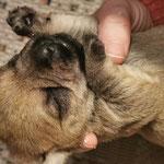 Clara tiefenentspannt in den Händen unserer Schwiegertochter Sandra