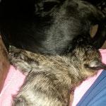 ... und liegt gern bei ihrer neuen Schwester, der Labradorin Khiana