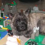 Tosca - gern mittendrin - hier in der Legostadt unserer Neffen.