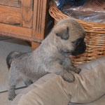 Bailey's ganz neugierig an Aenne's Nest. ( Hat sie nachträglich gleich markiert.)