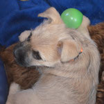 Bailey's hat einen Ballon ergattert und ins Nest geschleppt...