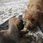 Annäherung zwischen Bonnie und Jantje
