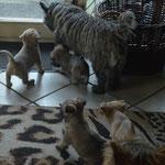 """Tosca mit einigen ihrer Töchtern vor dem """"Draußen-Gang"""""""