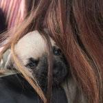 """Das """"Helle Schnittchen"""" vergräbt sich in den Haaren von Paul's Freundin Sandra"""