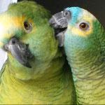 Jenny & Palino (Blaustirnamazonen)