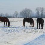 Winterweide