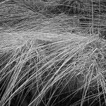 Herbstliches Binsengras im Moor