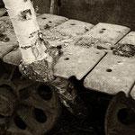In Raupenkette eingewachsenes Birkenstämmchen