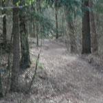 rein in den Wald
