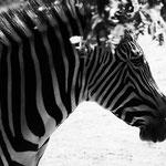 Zebrastreifen Dengler