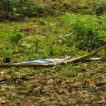 Bogenschiessen Jagdturnier 2013 Lyssach