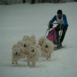 Hundeschlitten Weltmeisterschaft in Kandersteg