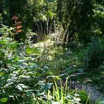 Gräser im September