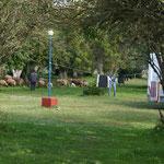 Natur-Rasenmäher auf dem Campingplatz