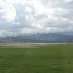 Fast mehr Vögel als in Afrika.