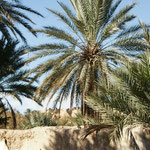 Blick auf die alte Kasbah